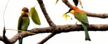 เทคนิค…การถ่ายภาพนกในธรรมชาติรอบๆบ้าน