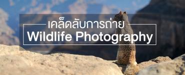 เคล็ดลับการถ่าย Wildlife Photography