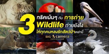 3 ทริคเน้นๆกับการถ่าย Wildlife ถ่ายยังไงให้ทุกคนหลงรักสัตว์ป่าเหล่านี้