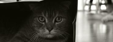 เทคนิคการถ่ายภาพสัตว์เลี้ยงแสนรัก