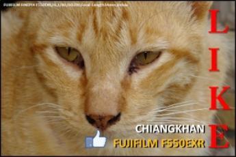 FUJIFILM F550EXR @ CHIANGKHAN